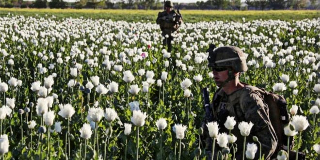 Afghan opium soaring since US invasion, 90 % of world's illegal opium is now from Afghanistan, Herland Report