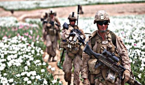 Afghanistan Drug Poppy Getty